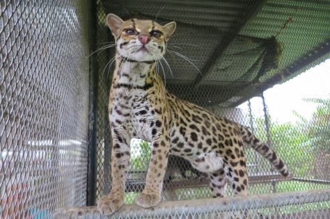 Margay...Thanks Daphne...